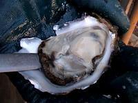 Shuck an Oyster - Step 4